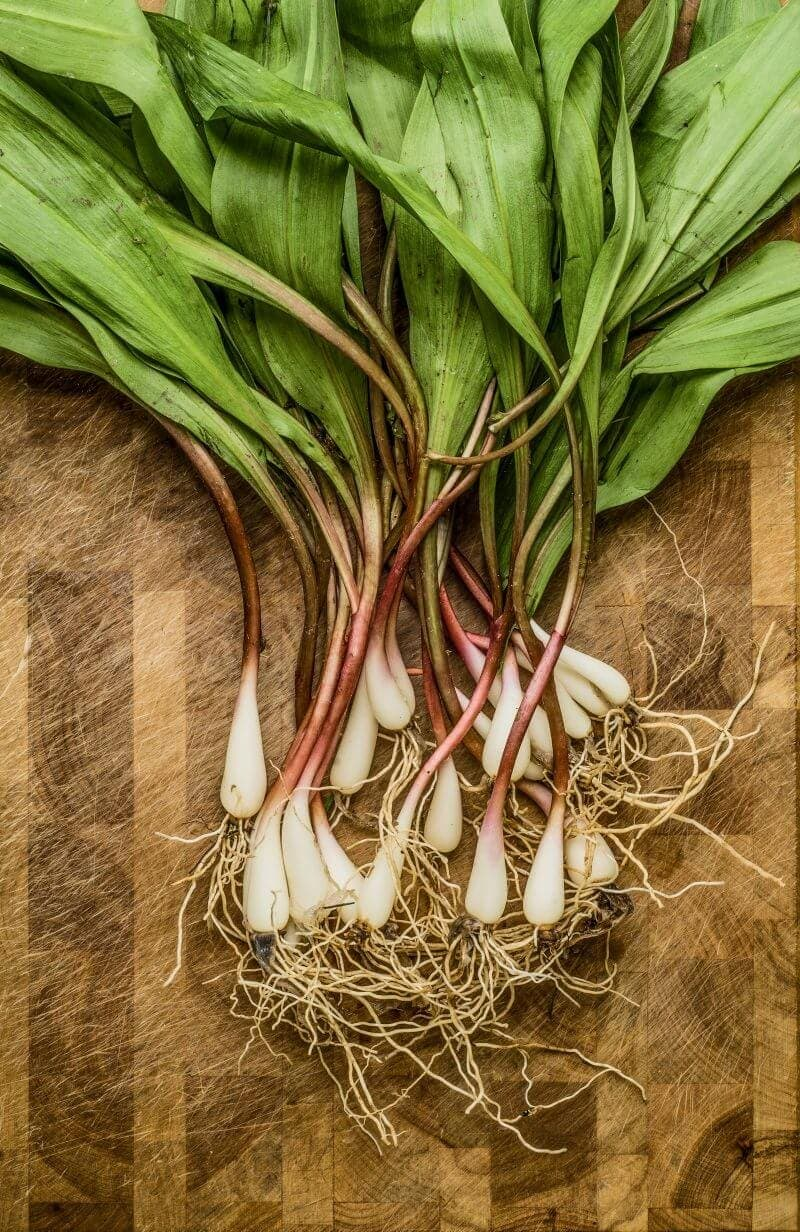 Prepping wild ramps for cooking.