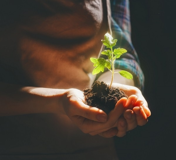 person holding soil with a growing plant
