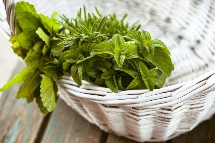 fresh herbs in a basket