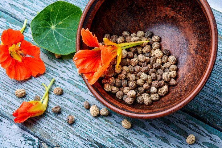 nasturtium seed pods and flowers