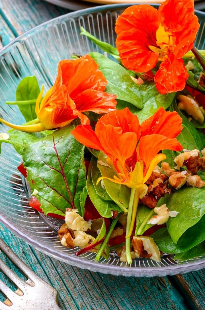 a salad of nasturtium leaves, flowers, walnuts, and a homemade dressing