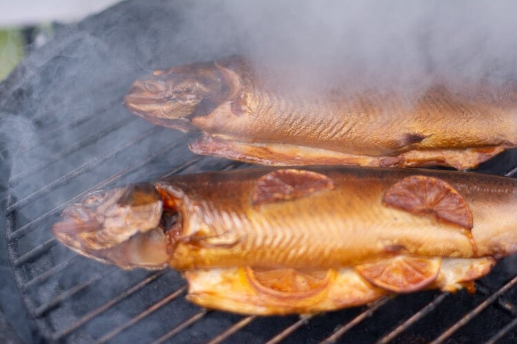 smoking trout on the big green egg