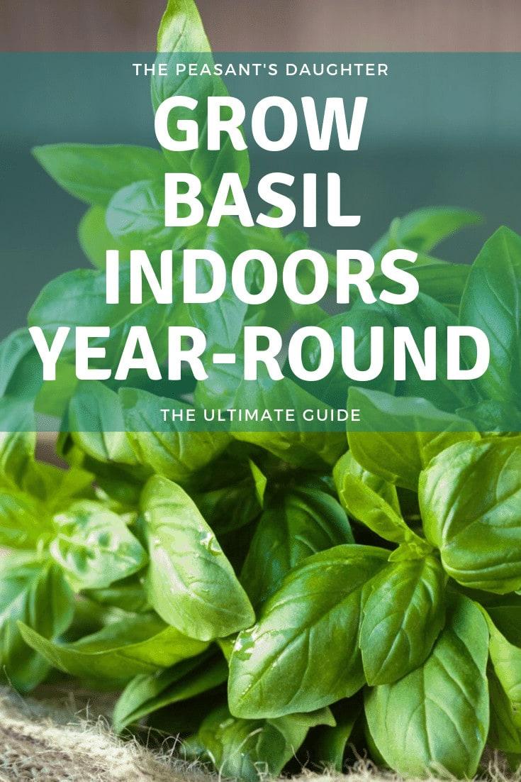 a bunch of fresh basil