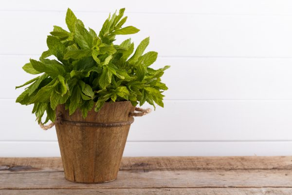 Fresh Mint in a small wooden bucket