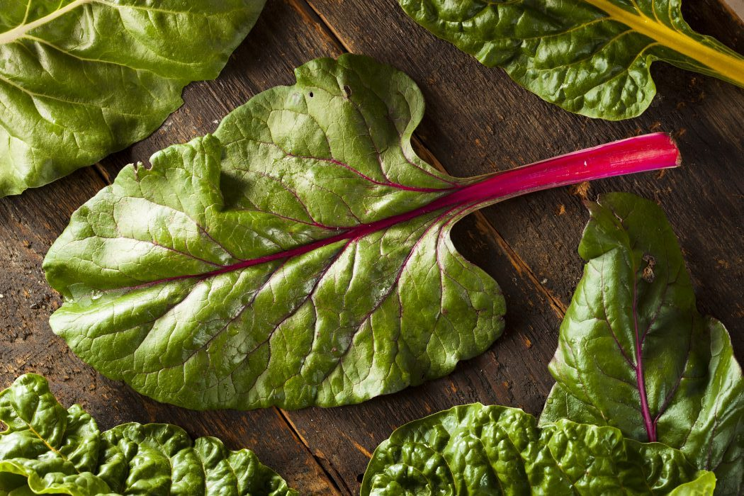 raw fresh swiss chard leaf with bright red stem