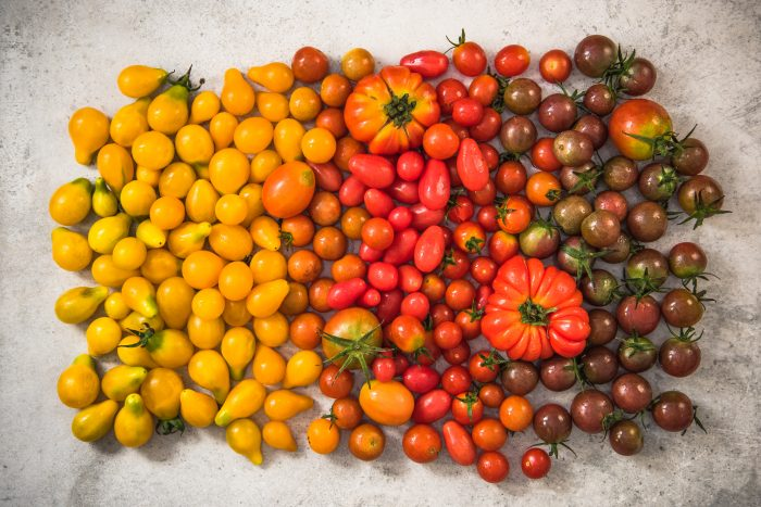 Colorful gamma of tomatoes.