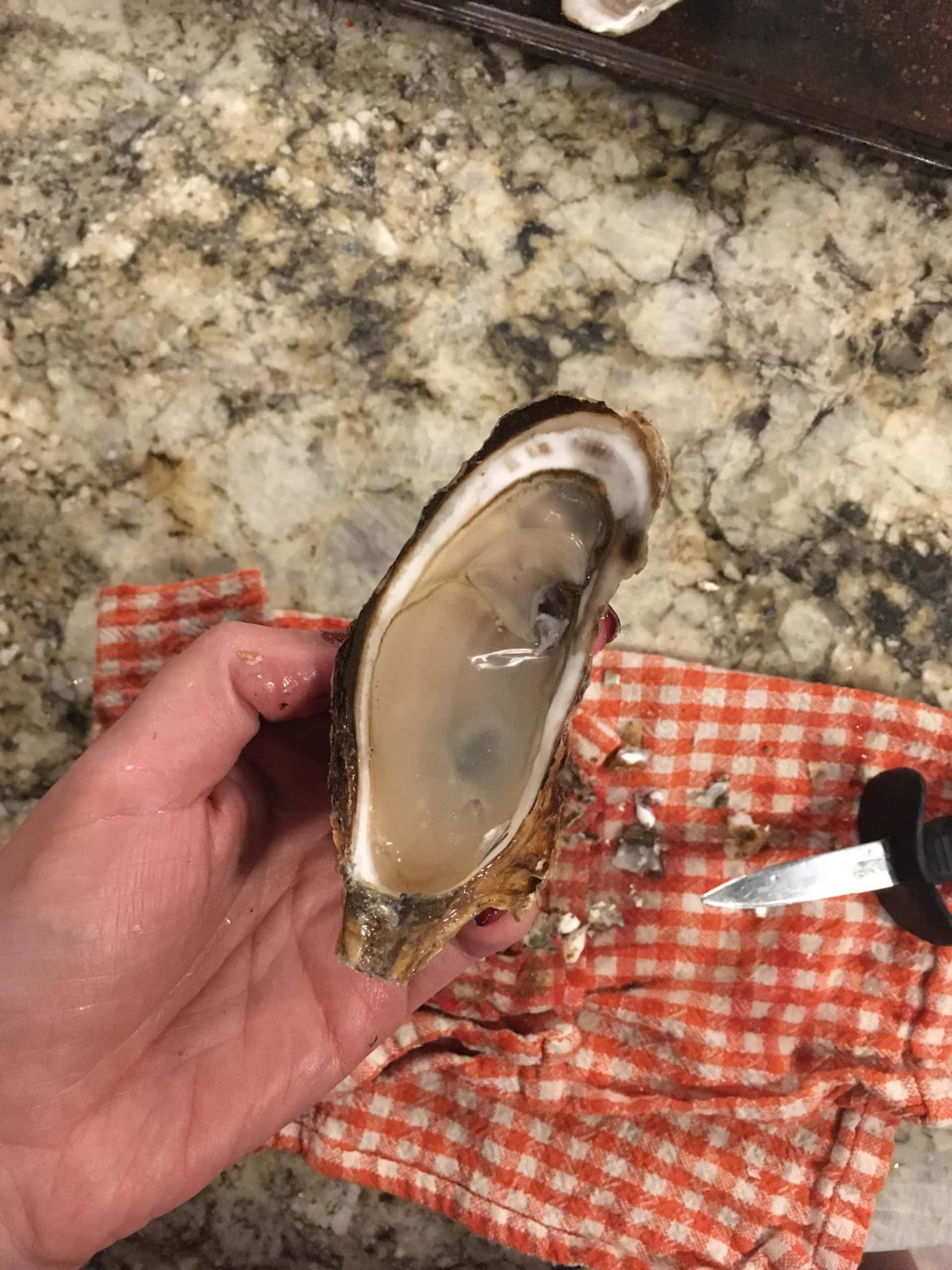 me holding a large oyster in my hand